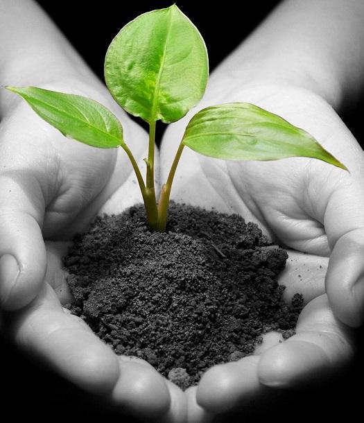 العلاقة بين البيئة والتنمية