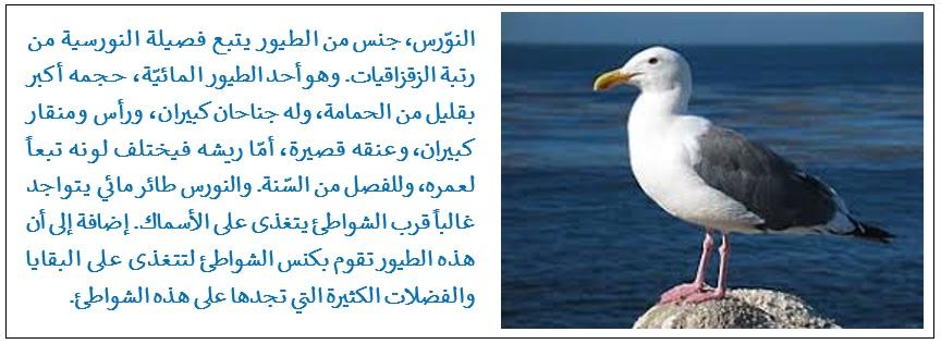 أجنة طائر النورس تتحدث سويا قبل الفقس
